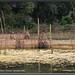 Fish traps by TTVo