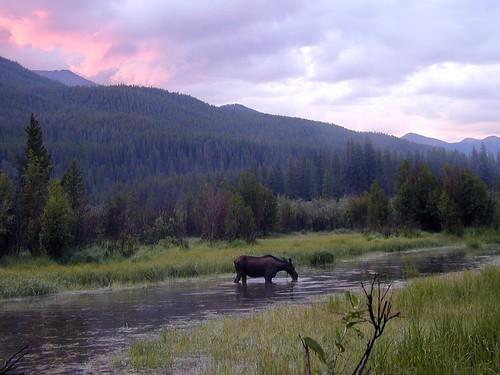sunset vacation colorado moose rmnp rockymountainnationalpark slickr dadss