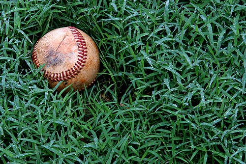 DEC lost baseball in the wet grass