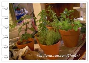 072005 Herbs 001