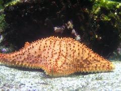 coral(0.0), coral reef(1.0), animal(1.0), fish(1.0), organism(1.0), marine biology(1.0), invertebrate(1.0), stony coral(1.0), marine invertebrates(1.0), fauna(1.0), underwater(1.0), starfish(1.0),
