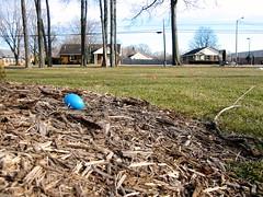 backyard(0.0), agriculture(0.0), field(0.0), garden(0.0), plantation(0.0), soil(1.0), wood(1.0), tree(1.0), yard(1.0), mulch(1.0), lawn(1.0),