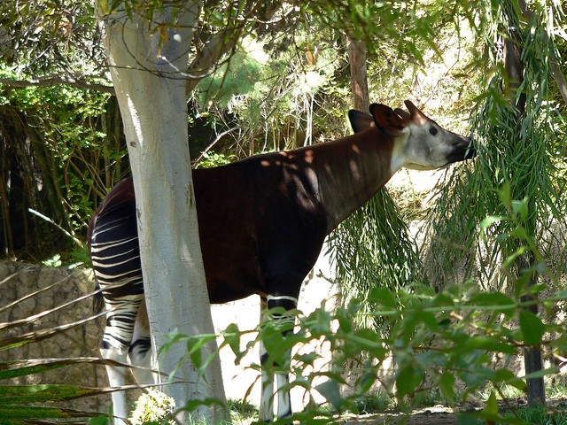 Half Zebra, Half Horse, All Awesome! | Flickr - Photo Sharing!