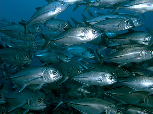 Open Innovation in Marine Biotechnology