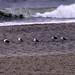 Small photo of The Ocean Roar