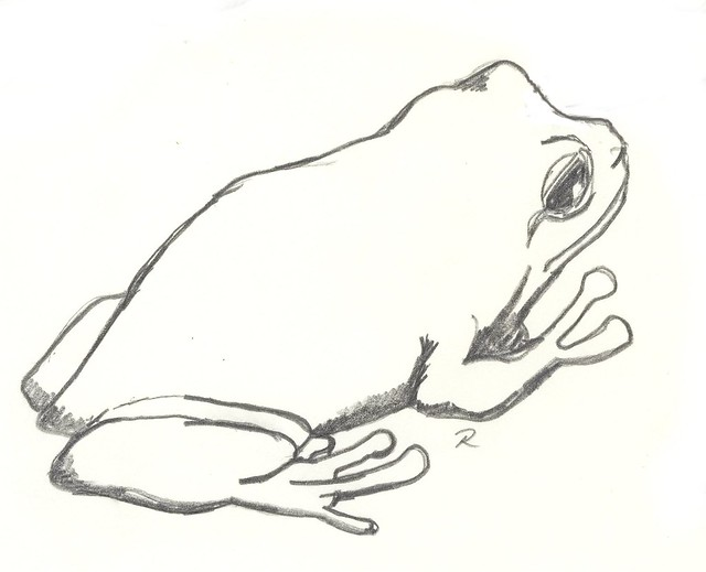Northern Leopard Frog Drawing Pacific Tree Frog...500