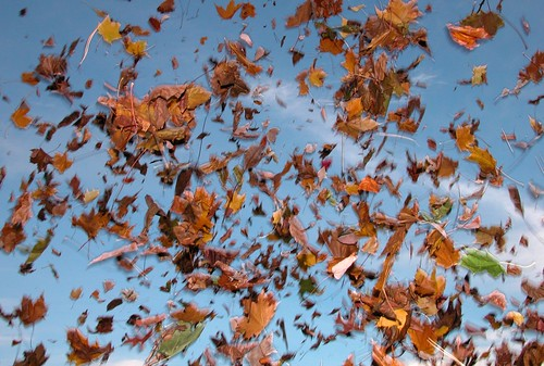 leaves in air