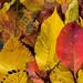 Autumn still life by gisleh