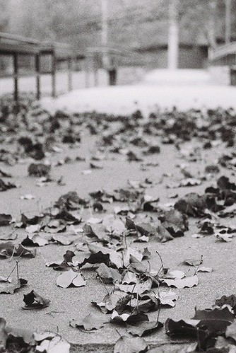 leaves on the sidewalk