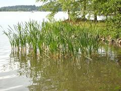 Lake Tuusula