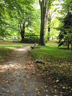 botanicki vrt early fall