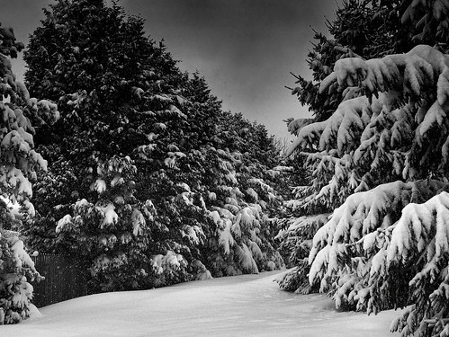winter white snow black tree beautiful pine gorgeous great pa lovely 222v2f