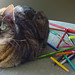 cat and pencils