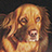 "the ""Just Golden Retrievers"" (#1-Lovable Breed) 20 photos a day on group icon"