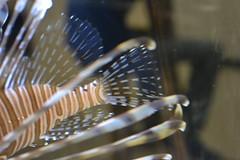 lionfish tail