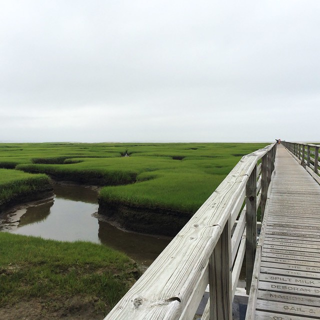 We ended our weekend at Gray's Beach. #saltmarsh #lowtide #somanyfiddlercrabs