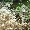 The babbling Rum Creek after the rain #creek #river