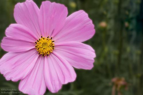 Flower-II.jpg