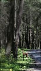 Weiser State Forest