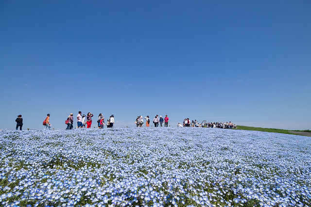 Hitachi Seaside Park 4