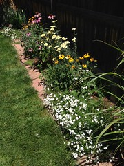 Perennial bed along back fence