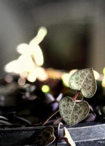 IMG 4707.1 Hearts