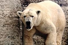 Zoo Visit January 2017