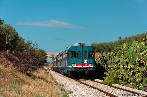 aln 668 trenitalia natura cactus foggia puglia manfredonia ferrovia treno automotrici paesaggio