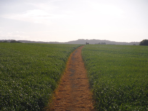 usually well-trampled or -cleared path towards Haredene Farm