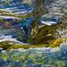 Le bec dans l'eau by Corinne Queme