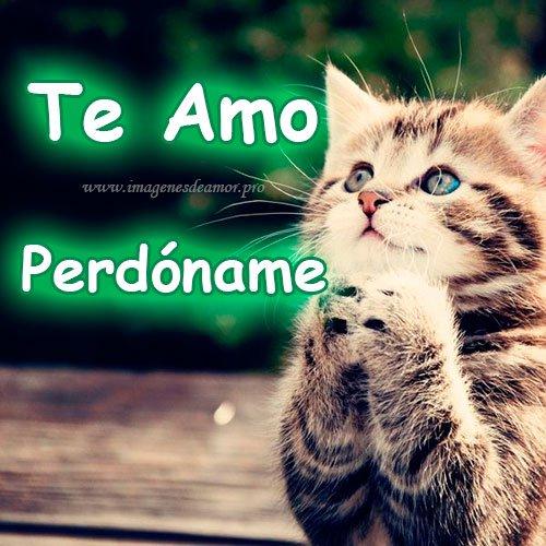 Imagenes De Lindos Gatitos Con La Frase Perdoname Mi Amor Imagenes