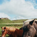 Iceland on Film by Kim Smith-Miller