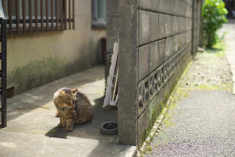 雑司が谷路地裏散歩 2015年7月19日