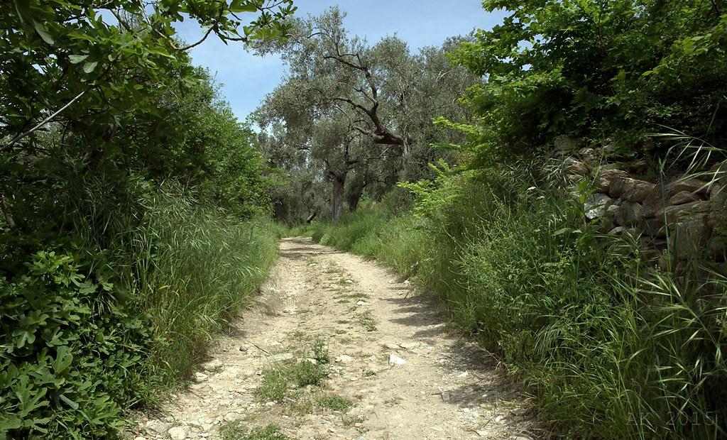 Thassos-Path Limenas