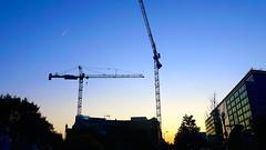 DC Dance of the Cranes 59085