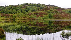 Feflections on a lochan at Tarvie near Contin