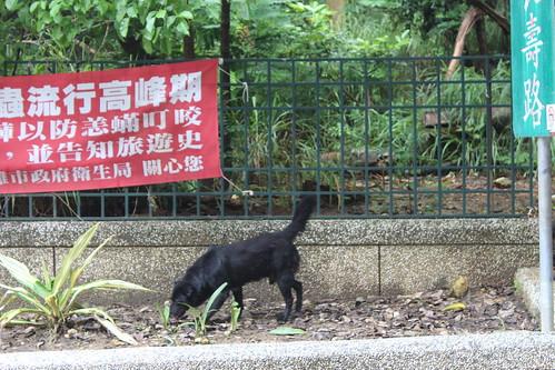 柴山上的浪犬。攝影:廖靜蕙。
