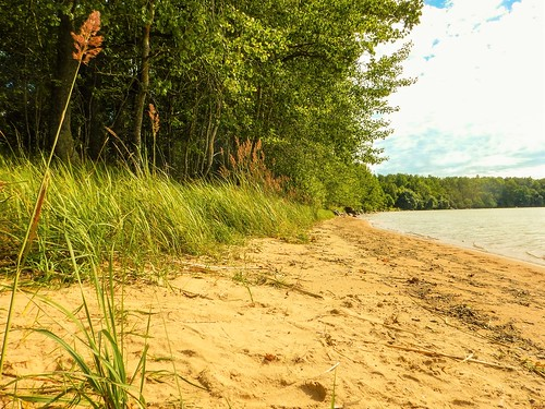 beach grass forest nude sand sweden bad nudist naturist sverige safe plage fkk vättern unofficial östergötland 2015 vätterviksbadet