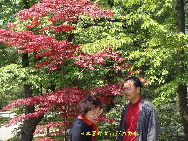 日本黑部立山01 (381), Sony DSC-T77