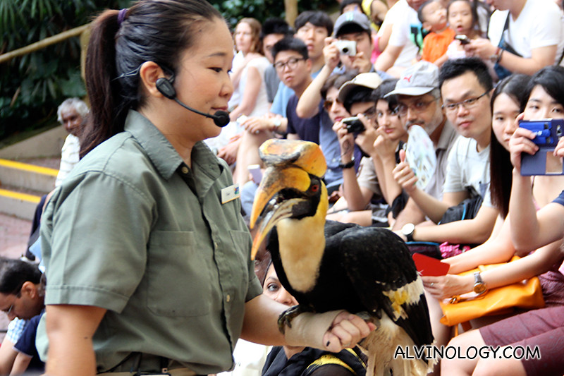 One of the trainer bringing a hornbill up close