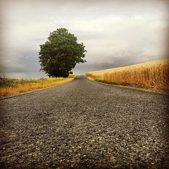 Nuances de gris, entre blés et vignes sur chemin de Misy. #lafermedemisy #cosaques #MarneValley #tarlant #landscape