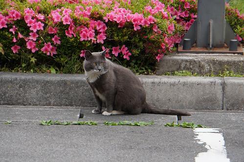五十里ダム(栃木)にいた猫