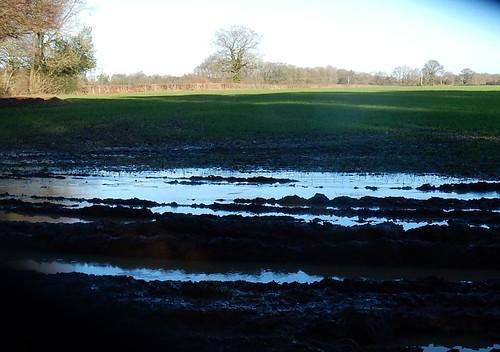 Water in field