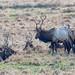 Elks Club by © Craig Leaper