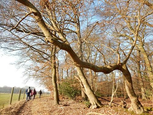 Trees 'n' walkers