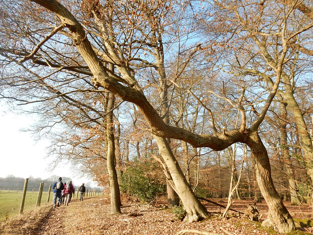 Trees 'n' walkers Gerrards Cross to Cookham
