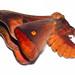 Hylesia nanus (Saturniidae, Hemileucinae) by J. Sebastian Moreno