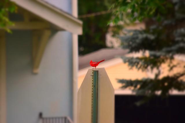 STOP! Cardinal Time!
