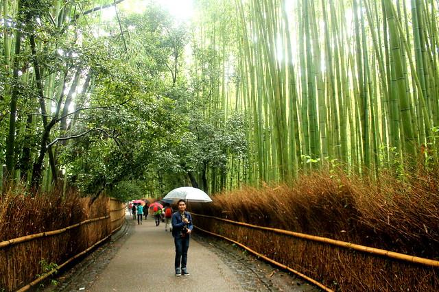 Bamboo Grove - Japan