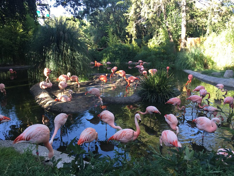 Flamingos en Africam Safari